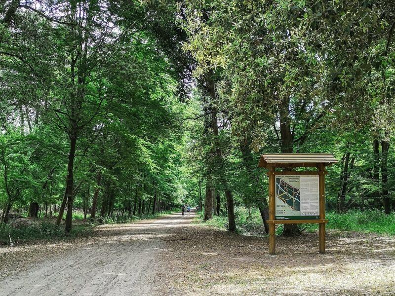 Il boscone mesola è la destinazione ideale nella provincia di ferrara per scoprire la natura e la fauna tipica del posto. Gli alberi adornano ogni spazio rendendo la passeggiata piacevole e fresca.