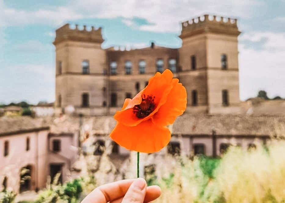 Un primo piano di un bellissimo fiore rosso tenuto in mano con sullo sfondo un enorme castello con i grandi torrioni laterali.