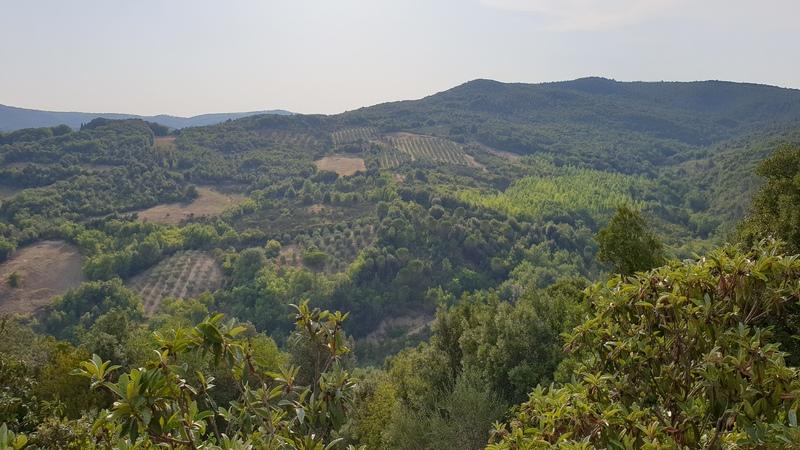 Una meravigliosa vista da Murlo Siena sulle colline verdi alberate della valle del Merse e la Val d'Arbia. Si possono vedere varie specie di alberi come pini e cipressi e alcuni vitigni.